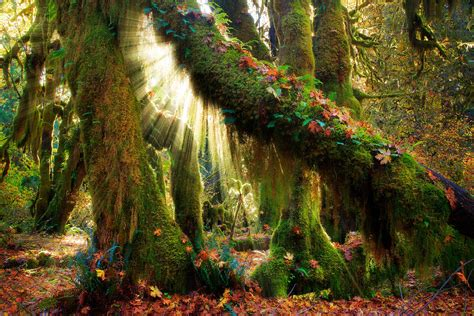 enchanted forest enchanted forest photograph by inge johnsson