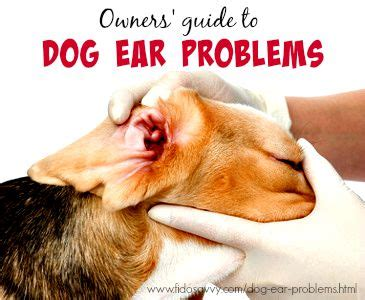 ear problems in dogs ear problems from causes to cures