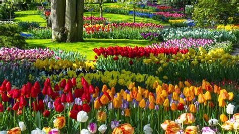 flores de jardin el jard 237 n de flores m 225 s bonito mundo