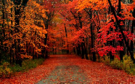 fall trees trees and fall on autumn trees wallpaper