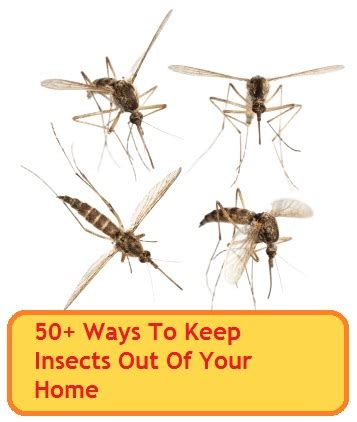 how to keep spiders out of your bed 50 ways to keep insects out of your home