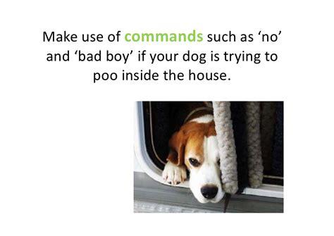 dog house training methods dog potty training useful tips and tricks