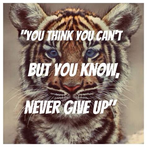 tiger quotes tiger quotes you think you can t but you never