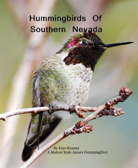 hummingbirds of southern nevada by faye kramer a mature