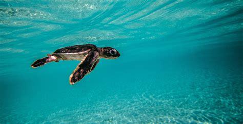 best underwater schultz photographer videographer writer