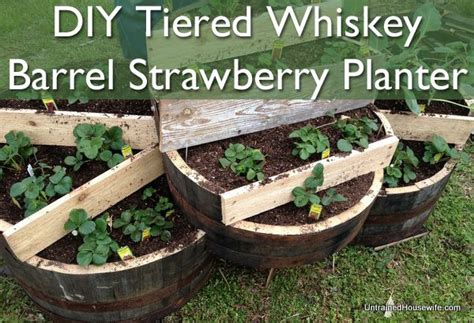 Strawberry Barrel Planter by Whiskey Barrel Strawberry Planter Gardening And