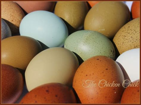 a rainbow of egg colors color of eggs a rainbow of egg colors what breed of