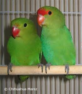 Breeding lovebirds quotes lol rofl com