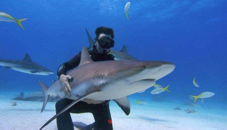 why not try hug a shark?   metro news