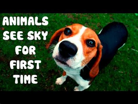 So Touching Rescued Animals See Sky For First Time Do Animals See In Color