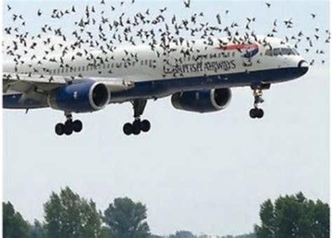 cara naik pesawat adisucipto cara kirim atau bawa burung dengan pesawat udara klub burung