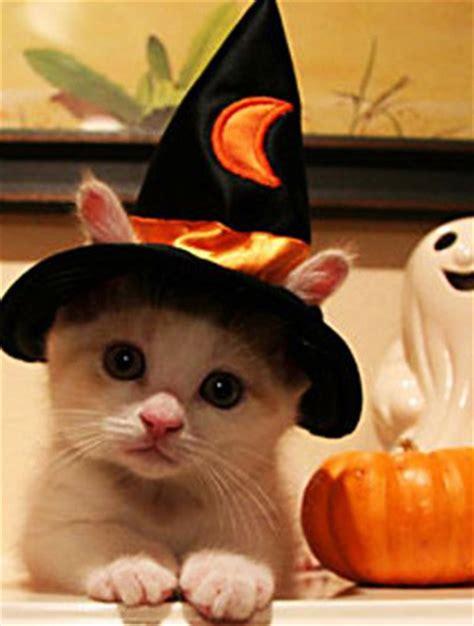 imagenes halloween gato cuidados para gatos como cuidar a tu gato halloween