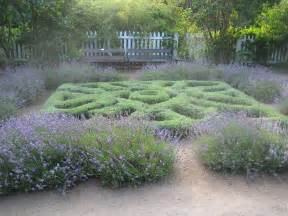 knot garden design plants to use for herb knot gardens