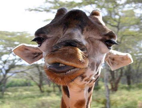 imagenes animales grasiosos animales graciosos 10 blogodisea