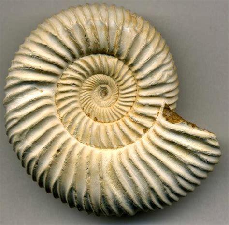 imagenes de fosiles los f 243 siles biolog 237 a