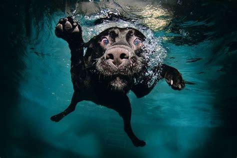 beagle alimentazione corretta labrador alimentazione archives il carattere dei cani