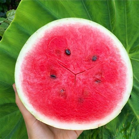 Melon Island Detox by Watermelon Island Coconut Water Fast Results Naturally