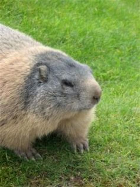 groundhogs on groundhog day i want you and