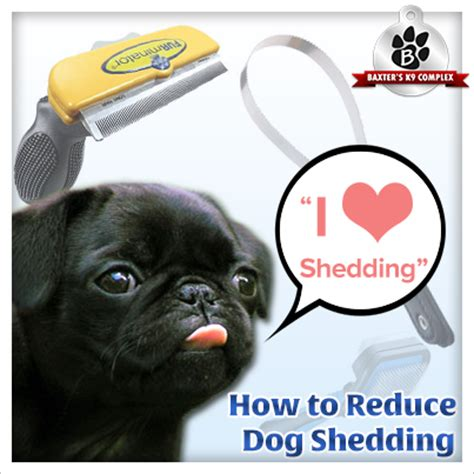 how to stop shedding how to reduce shedding