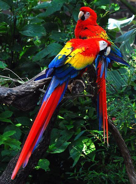 amazon rainforest animals amazon rainforest facts for kids amazon rainforest animals