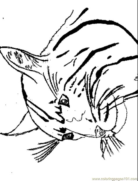 coloring pages wildcat animals cats  printable