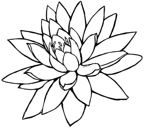flowers line drawing images clipart best lotus flower drawing sketch clipart best
