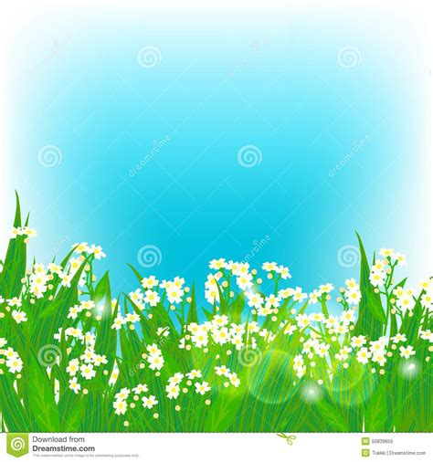 vector card with small white flowers stock vector image