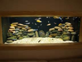 Peces on Pinterest   African Cichlids, Cichlids and Plecostomus