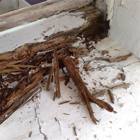 Wood Window Sill Replacement Replacement Windows Replacement Window Sill Wood