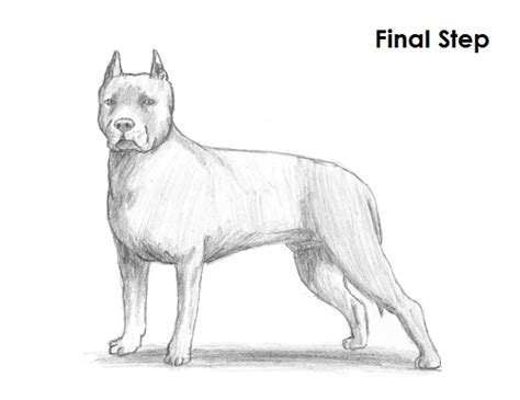 how to pitbull puppies growling pitbull drawing www pixshark images galleries with a bite