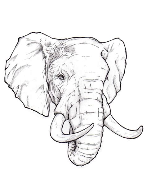 how to draw an elephant head step by step easy for