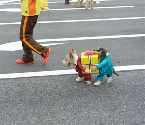top pet gifts 8 best dog halloween costumes on the internet