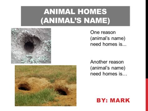 animal homes sjl professional development