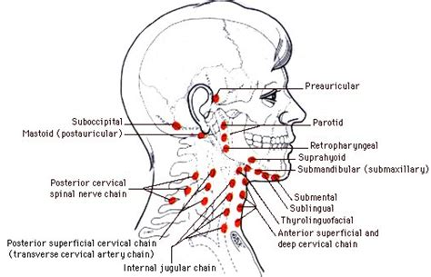 wo liegen mandeln harter knubbel am hinterkopf lymphknoten