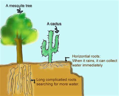 succulents plants adaptations for kids teachers network operation desert learn