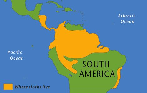 where do jaguars live in south america sloth by the lovely gareth thinglink