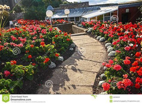 imagenes de jardines con geranios bello giardino con i fiori rossi del geranio immagine