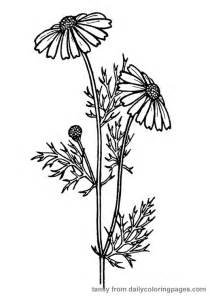 coloring pages of real flowers realistic flower coloring pages flower coloring page