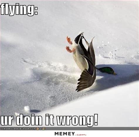 duck boat jokes duck memes funny duck pictures memey