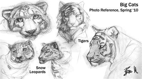sketchbook big animal sketchbook big cats 01 by 89ravenclaw on deviantart