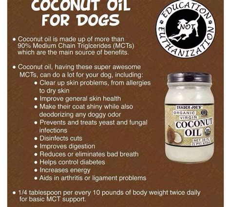 coconut uses for dogs coconut healthy pets trusper