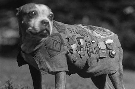Sergeant Stubby Here S Why Working Dogs Outrank Their Human Handlers Barkpost