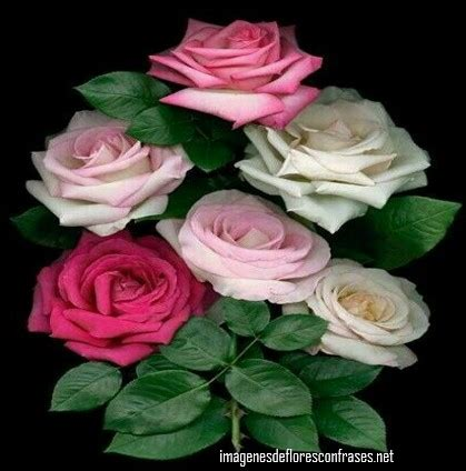 imagenes de flores naturales gratis descargar im 225 genes de flores hermosas flores preciosas