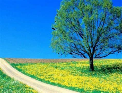 imagenes en 3d de paisajes con movimiento paisaje en movimiento 3d youtube