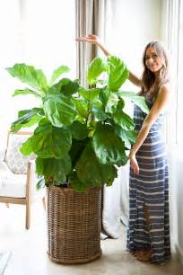 home plant related keywords suggestions for houseplants