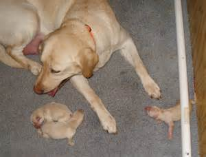 puppies being born ahead babies and puppies the cutest post squash