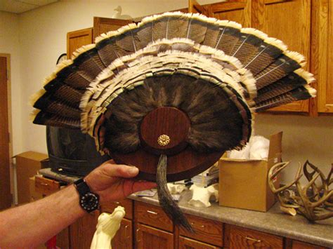 how to mount a turkey tail