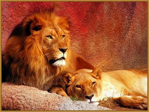 Imagenes Leones Tiernas | imagenes de leonas tiernas archivos imagenes de leones