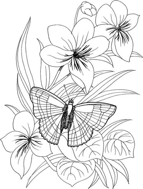 coloring pages of flowers and butterflies free coloring pages of butterfly and flower pictures