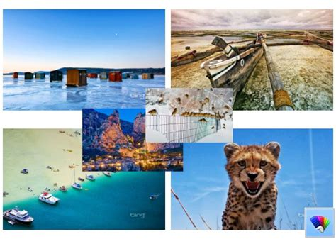 bing themes for windows 8 1 animals archives page 5 of 7 winaero